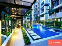 Condo Siamese Nanglinchee For Sale